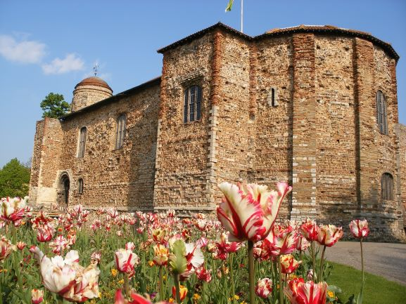 A view of Colchester Castle walls from the tulip flowerbed. The tulips in the foreground are pink and cream in colour. The castle tower and a doorway are visible in the back left and seven windows of varying sizes are visible. A yellow flag flies above the castle and the sky is blue above.